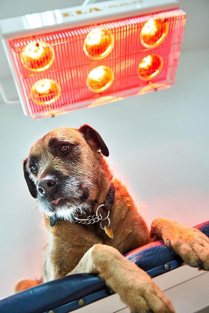 Hund posiert Werbefotograf on Location für Unternehmen